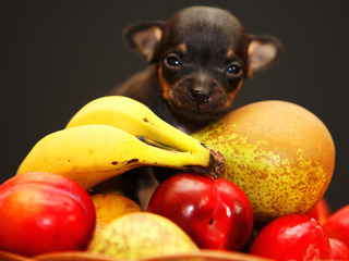 Which fruits can your dog safely eat?