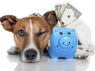 Pets and taxes: What you can and cannot do