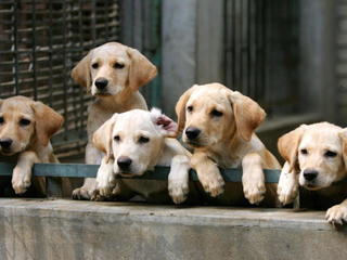 Take your mind off the election with puppies