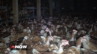 What are 'cage free' eggs?