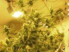 Inside a medical marijuana grow house