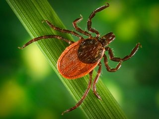 Tick-proof your yard