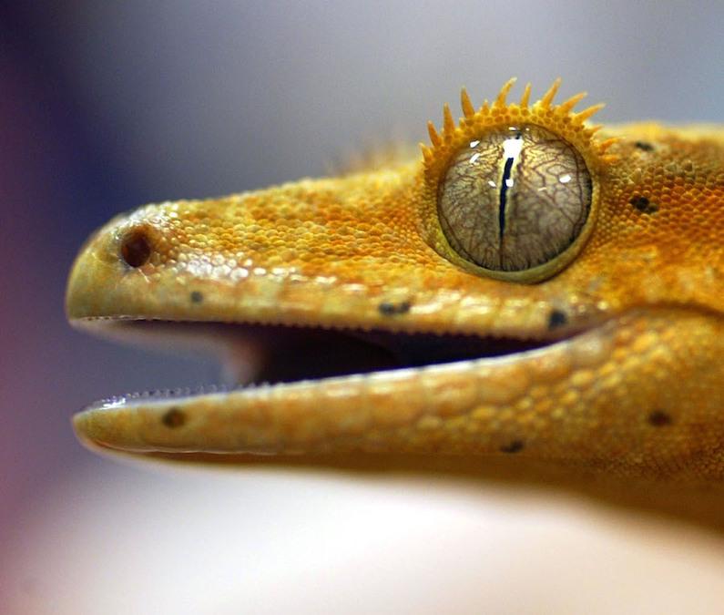 Gecko butt-dials 'bazillion' times from Hawaii seal hospital - WXYZ.com