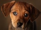 Animal Welfare Society
