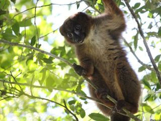 Lemur surprises FL trooper during DUI arrest