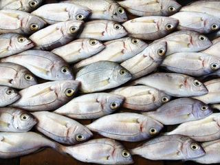 'Do not eat' fish advisory issued