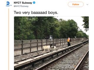 Goats run on to NY subway tracks